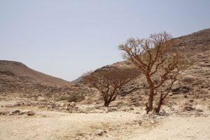 Mein Oman Blog für Reisende und Entdecker 8