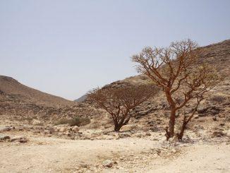 Salalah - vom Geschmack der Sonne Arabiens und dem Duft des omanischen Himmels 2