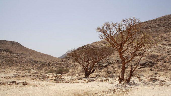 Wilder Oman - Wandern auf den Spuren der arabischen Götter 7