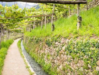 castle-plars-algunder-waal-vines-south-tyrol-gal9