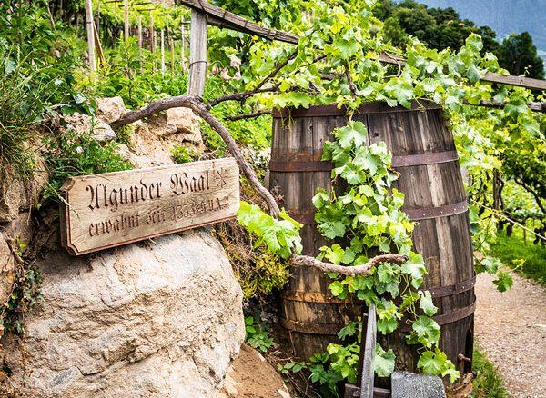 castle-plars-algunder-waal-south-tyrol-gal8