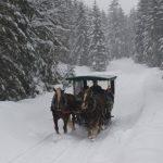 Sights_Carriage_Winter_SchlossElmau_gal38